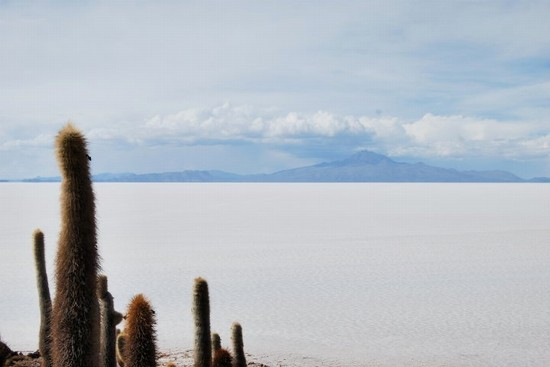 50846_la_paz_cactus_nel_deserto