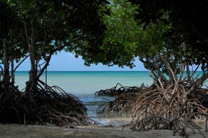 7022_belmopan_mangrovie