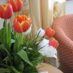 Hostel: Hotel Garni Buchinger - FOTO 1