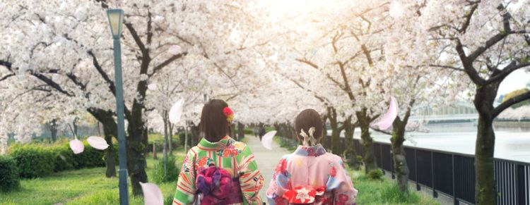 Geisha_3