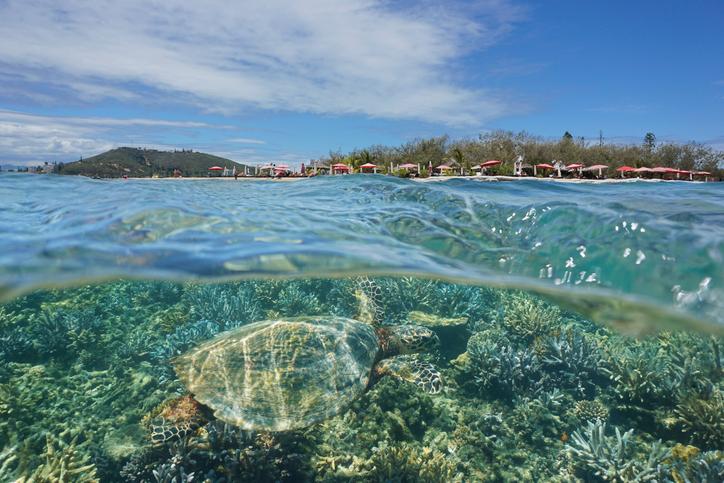 nuova caledonia barriera corallina
