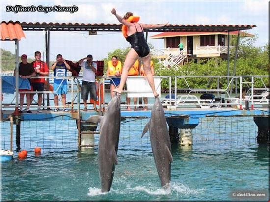 dolphinarium holguin
