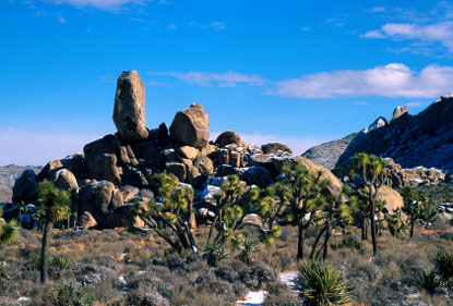 Photo joshua tree national park parco nazionale in Joshua Tree National Park - Pictures and Images of Joshua Tree National Park 