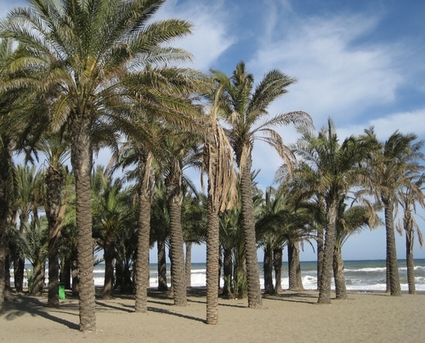 Photo torremolinos palm trees beach in Torremolinos - Pictures and Images of Torremolinos