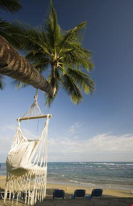 Swing on palm tree