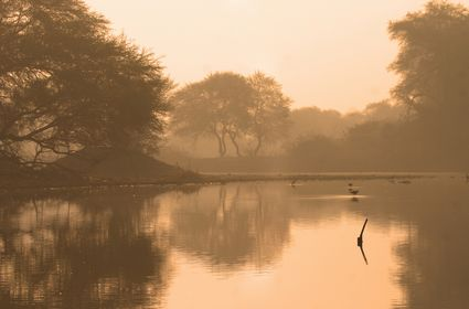 Photo Wetland with black winged stilts in Bharatpur - Pictures and Images of Bharatpur