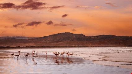 Atlantic Coast - Flamingoes