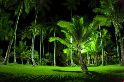 Palm trees and bright green grass at night