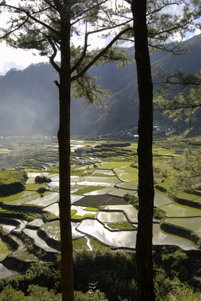 Photo Rice Terrace in Luzon - Pictures and Images of Luzon 