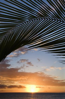 Photo kihei sunset sky framed by palm fronds over the pacific ocean in Kihei - Pictures and Images of Kihei