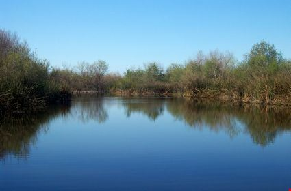 Reflection of bushes in a bright blue pond in the San Joaquin Wildlife Sanctuary