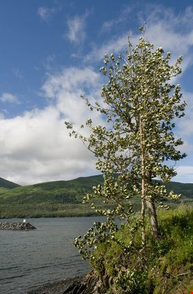 Larssen Bay