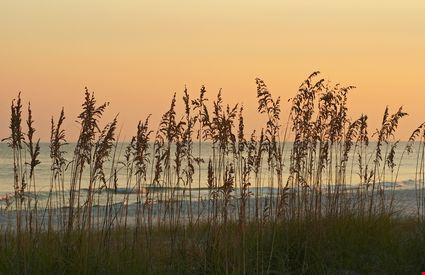 Sea oats silhouetted against an orange sky