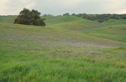 Green hills in spring; Santa Rosa Plateau Ecological Reserve