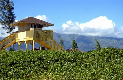 Lifeguard hut on a tropical beach with plant foreground
