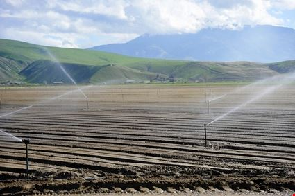 Irrigation of new Crop