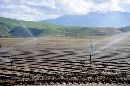 Irrigation of new Crop