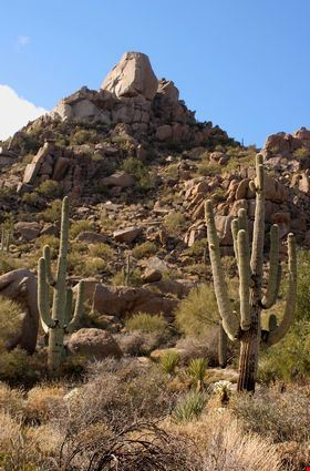 Desert scenic with big boulder rocks and saguaro cactus