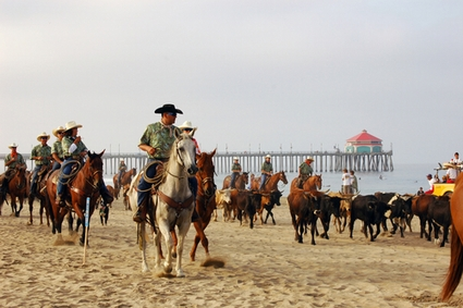 Photo Cowabunga Beach Cattle Drive in Orange County - Pictures and Images of Orange County 