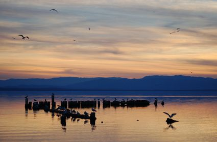 Photo salton sea seagulls on wooden pilings in Salton Sea - Pictures and Images of Salton Sea