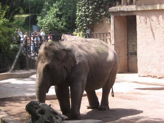 Photo elefante in Rome - Pictures and Images of Rome