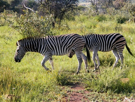 Photo Pilanesber  NP in Johannesburg - Pictures and Images of Johannesburg