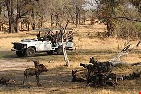 Safari-tour in Africa