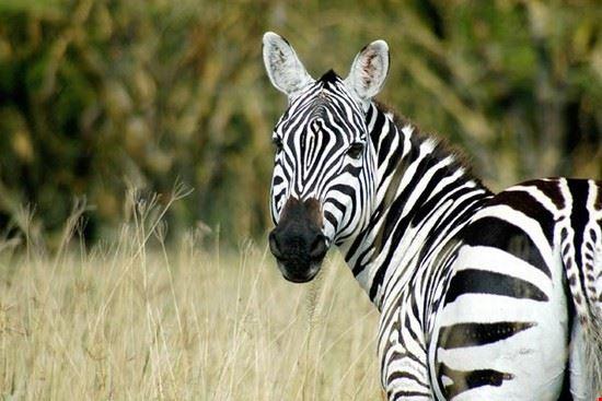 Ghana Safaris