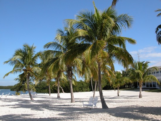 White Sand Beach Palm Tree Photo White Sand Beach With