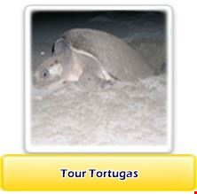 Turtle tour in San Juan del Sur