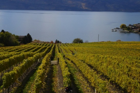 Photo 1k in Penticton - Pictures and Images of Penticton - 550x367  - Author: Okanagan Valley Wine Tours, photo 1 of 4