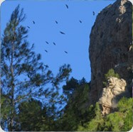 Photo nountains2 in Alicante - Pictures and Images of Alicante - 187x186  - Author: Mountain Walks Spain, photo 2 of 19