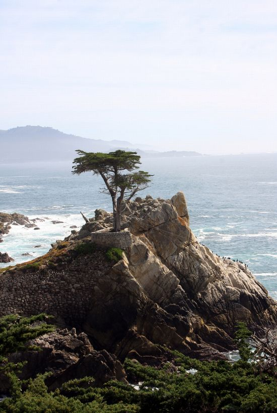 Photo 17 Mile Drive in Monterey - Pictures and Images of Monterey - 550x820  - Author: Editorial Staff, photo 2 of 16