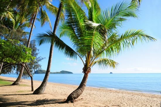 Photo Palm Cove Beach in Palm Cove - Pictures and Images of Palm Cove