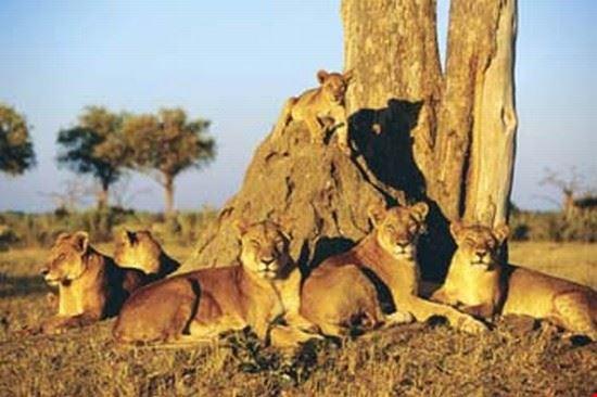 dar es salaam serengeti national park