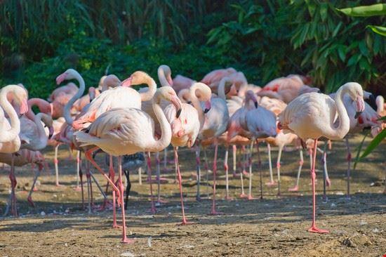 hannover flamingos im hannover zoo