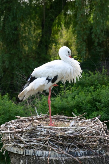 Photo leipzig storch im zoo leipzig in Leipzig - Pictures and Images of Leipzig - 366x550  - Author: Lena, photo 1 of 57