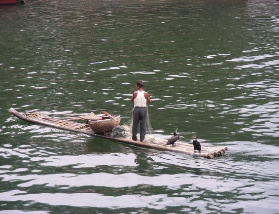 Photo La pesca con i cormorani in Shanghai - Pictures and Images of Shanghai