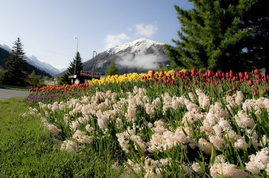 Photo davos in spring davos in Davos - Pictures and Images of Davos