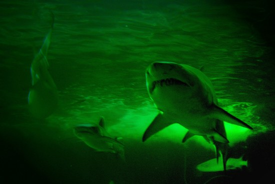 Photo sydney aquarium in Sydney - Pictures and Images of Sydney - 550x368  - Author: Editorial Staff, photo 1 of 103
