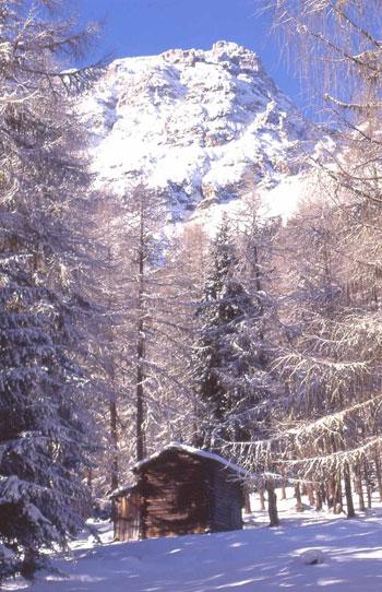 Foto Montagna innevata a Sesto - 350x542  - Autore: Redazione, foto 2 di 19
