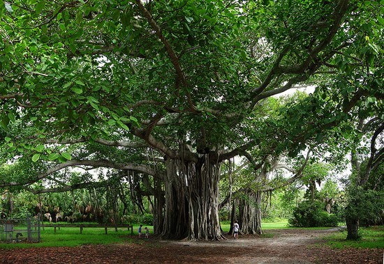 Photo Hugh Taylor Birch State Park in Fort Lauderdale - Pictures and Images of Fort Lauderdale - 550x379  - Author: Damien, photo 1 of 37