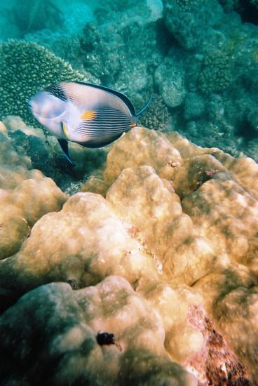 Photo Marsa Alam-underwater in Marsa Alam - Pictures and Images of Marsa Alam