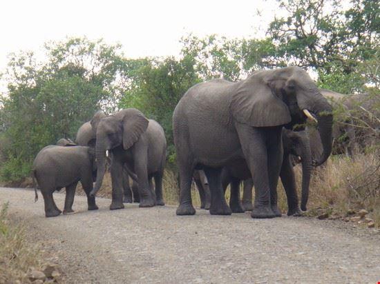 Alt,elefanti