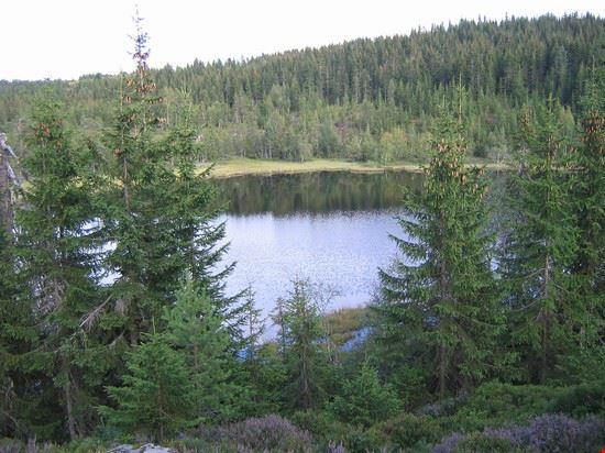 Joputten N for Råbjørn
