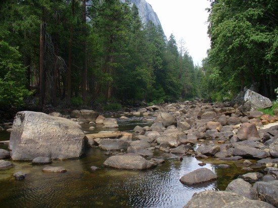 Photo il fiume che attraversa il parco yosemite national park in Yosemite National Park - Pictures and Images of Yosemite National Park