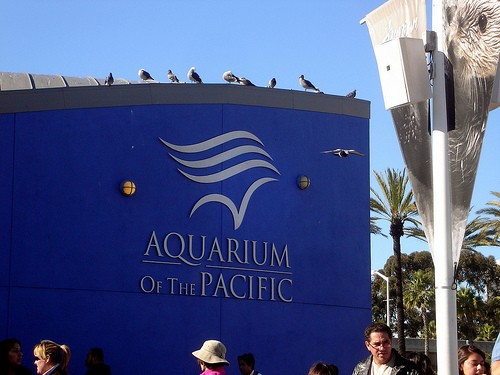 Aquarium Of The Pacific Long Beach Museums