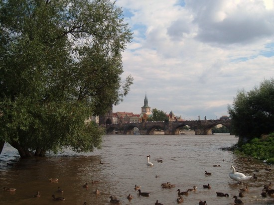 Photo praga praga in Prague - Pictures and Images of Prague - 550x412  - Author: Simonetta, photo 23 of 553