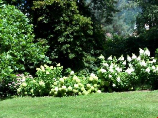parco, fioritura di ortensie