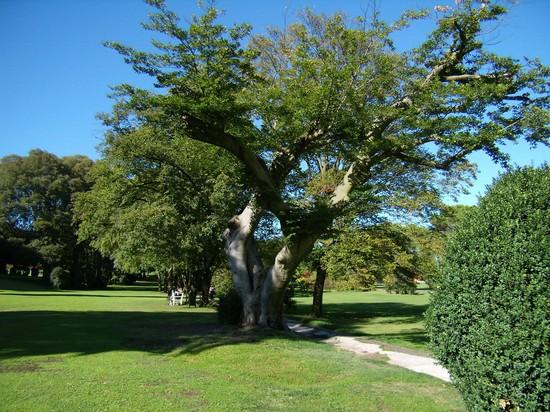 Parco sigurt - Parco giardino sigurta valeggio sul mincio vr ...